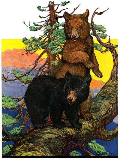 """Bears in Tree,""August 16, 1930-Charles Bull-Giclee Print"