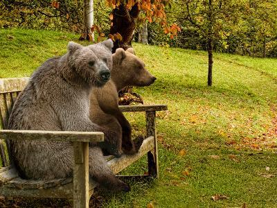 Bears Sitting on a Bench--Photographic Print