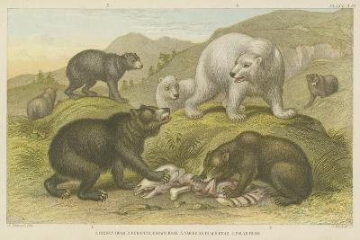 Bears--Giclee Print