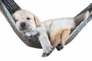 Small Dog Lying in the Hammock by Beate Margraf