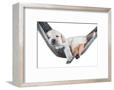Small Dog Lying in the Hammock