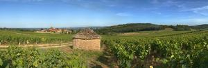 Beaujolais Vineyard, Saules, Saone-Et-Loire, Burgundy, France