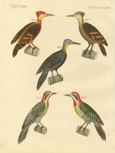 Beautiful and Foreign Woodpecker--Giclee Print