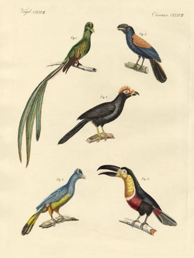 Beautiful and New Climbing Birds--Giclee Print