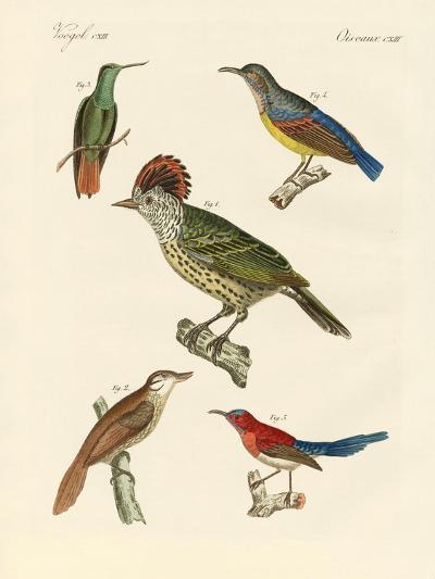 Beautiful and Strange Birds--Giclee Print