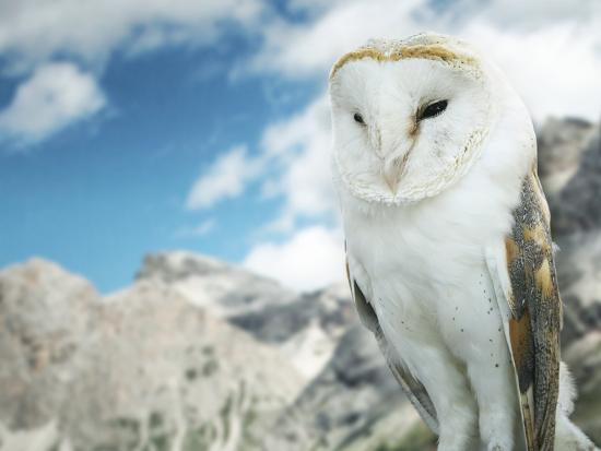 Beautiful Barn Owl in to the Wild Nature-Valentina Photos-Photographic Print