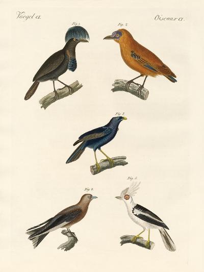 Beautiful Birds--Giclee Print