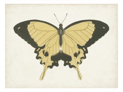 https://imgc.artprintimages.com/img/print/beautiful-butterfly-i_u-l-q1gw8a80.jpg?p=0