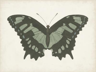 https://imgc.artprintimages.com/img/print/beautiful-butterfly-ii_u-l-q1gw7vi0.jpg?p=0