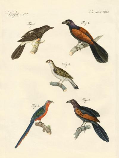 Beautiful Climbing Birds--Giclee Print