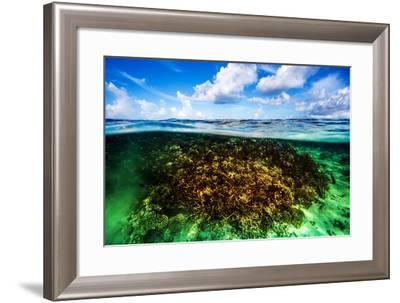 Beautiful Coral Garden Underwater, Diving on Maldives, Blue Cloudy Sky, Turquoise Water, Luxury Sum-Anna Omelchenko-Framed Photographic Print
