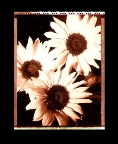 Beautiful Flower IV-Gerard Van Hal-Art Print