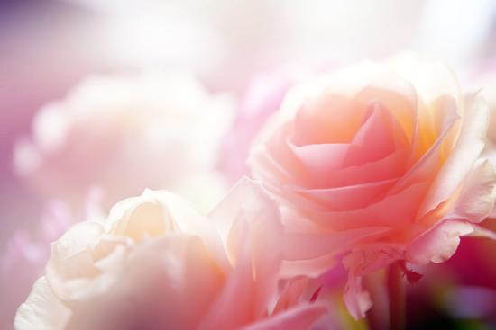 Beautiful Flowers Made with Color Filters-Timofeeva Maria-Photographic Print