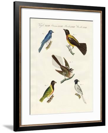 Beautiful Foreign Birds--Framed Giclee Print