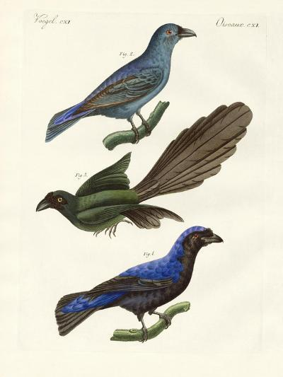 Beautiful Foreign Birds--Giclee Print