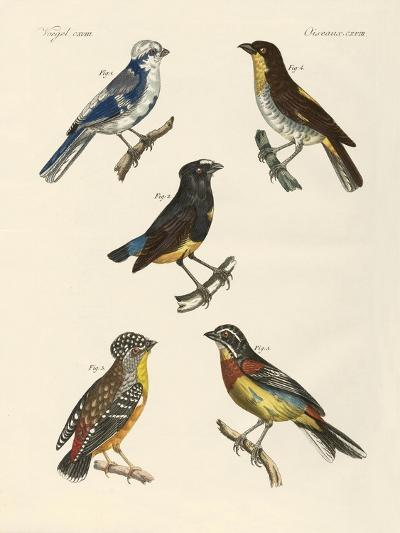 Beautiful Foreign Birds--Giclee Print