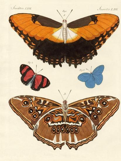 Beautiful Foreign Butterflies--Giclee Print