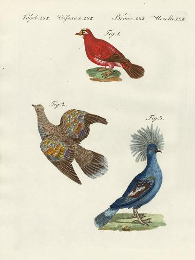 Beautiful, Foreign Pigeons--Giclee Print