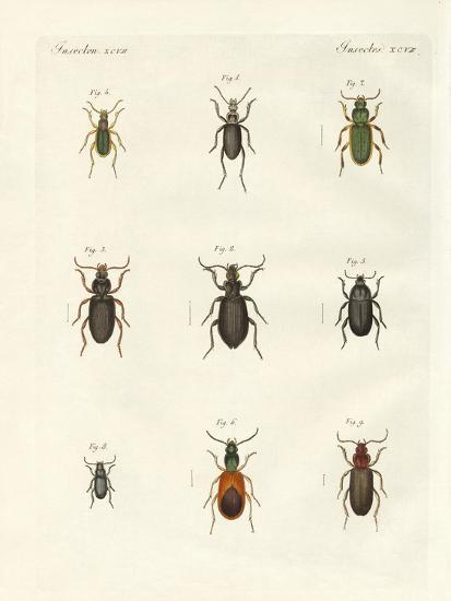 Beautiful German Beetles--Giclee Print