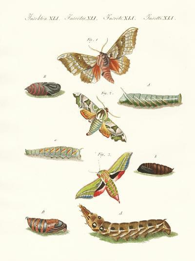 Beautiful German Twilight Butterflies--Giclee Print