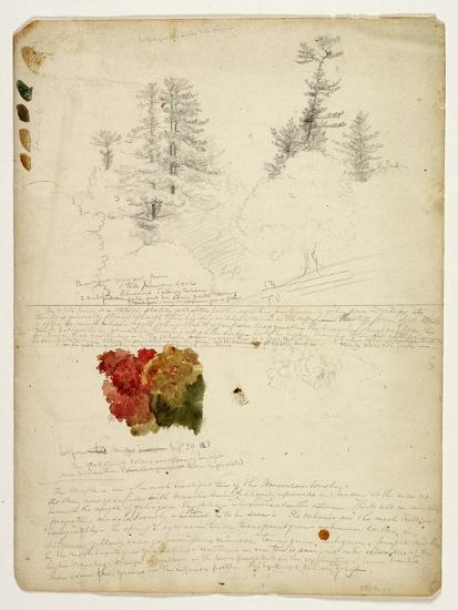 Beautiful Groups of Pines; Tints from Maples, New Hampshire, September 30th 1828-Thomas Cole-Giclee Print