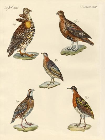 Beautiful Hen-Like Birds--Giclee Print