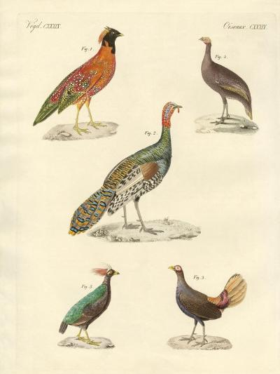 Beautiful Hen-Like Birds--Giclee Print