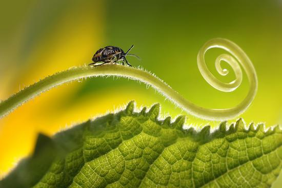 Beautiful Insects on a Leaf Close-Up, Beautiful Glowing Background, Beautiful Light, Spiral Plant,-Laura Pashkevich-Photographic Print