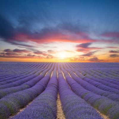 Beautiful Landscape of Blooming Lavender Field in Sunset. Provence, France, Europe-Jakub Gojda-Photographic Print