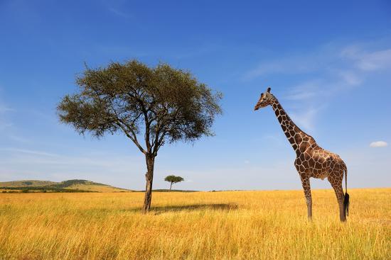 Beautiful Landscape with Tree and Giraffe in Africa-Volodymyr Burdiak-Photographic Print