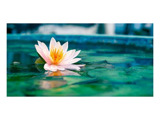 Beautiful Lotus Flower In Pond Art Print By Artcom