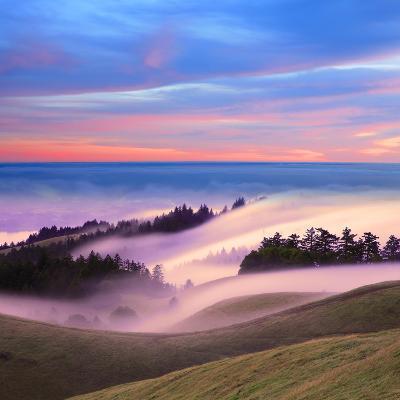 Beautiful Nature Scene, Mount Tamalpais, Marin County, California-Della Huff-Photographic Print