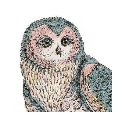 Beautiful Owls IV Pastel Crop-Daphne Brissonnet-Art Print