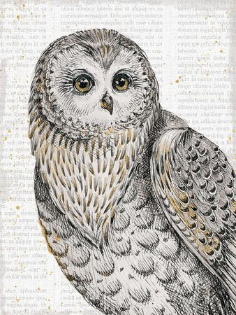 Beautiful Owls IV-Daphne Brissonnet-Art Print