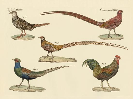 Beautiful Pheasants--Giclee Print