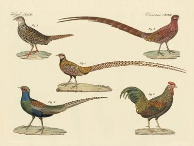 https://imgc.artprintimages.com/img/print/beautiful-pheasants_u-l-pvr0fe0.jpg?p=0