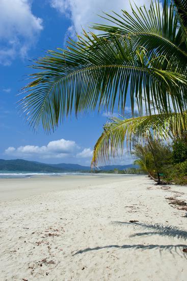 Beautiful Sand Beach, Cape Tribulation, Queensland, Australia, Pacific-Michael Runkel-Photographic Print