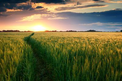 Beautiful Sunset, Field with Pathway to Sun, Green Wheat-Oleg Saenco-Photographic Print