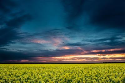 Beautiful Sunset in the Field-Oleg Saenco-Photographic Print