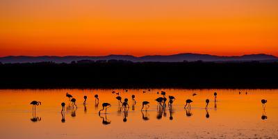 Beautiful Sunset Panorama with Flamingos Silhouettes, National Park Camargue, Provence, France-Jakub Gojda-Photographic Print