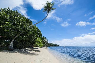 Beautiful White Sand Beach and Palm Trees on Yap Island, Micronesia-Michael Runkel-Photographic Print