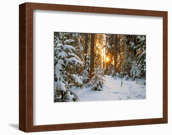 Beautiful Winter Landscape with Sunset in the Forest-yanikap-Framed Photographic Print
