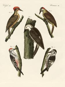 Beautiful Woodpeckers