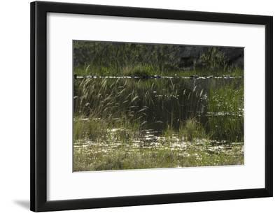 Beaver Pond, Custer State Park in the Black Hills, South Dakota