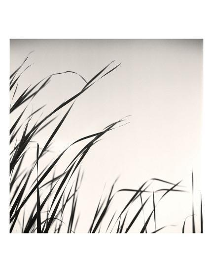 Beaver Pond, Study #1-Andrew Ren-Art Print