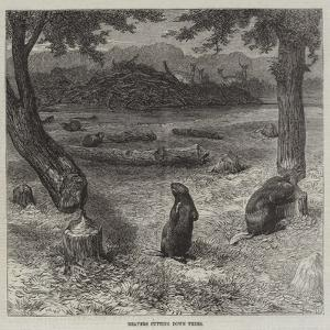 Beavers Cutting Down Trees