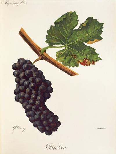 Beclan Grape-J. Troncy-Giclee Print
