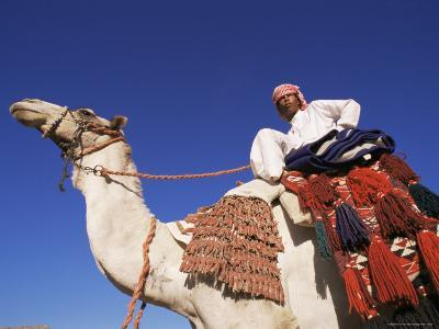 Bedouin Riding Camel, Sinai, Egypt, North Africa, Africa-Nico Tondini-Photographic Print