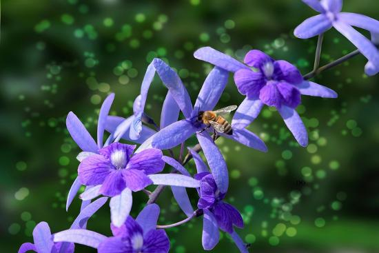 Bee and Purple Flowers-Don Spears-Art Print