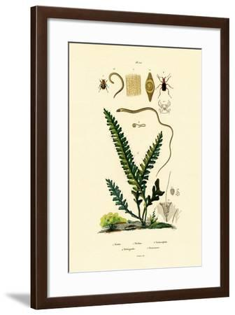 Bee Beetle, 1833-39--Framed Giclee Print